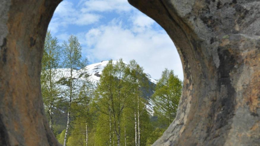 21 Martie – Ziua Internațională a Pădurilor